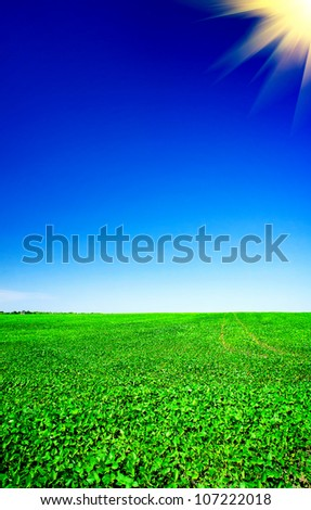 Amazing of soy plants in a cultivated farmers field. - stock photo