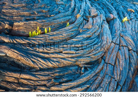 Amazing old lava pattern and new fern growing through it in Hawaii Volcanoes National Park, Big Island, Hawaii - stock photo