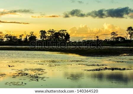 Amazing Pantanal landscape - Pantanal is one of the world's largest tropical wetland areas located in Brazil , South America - stock photo