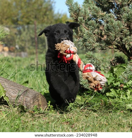 Amazing puppy of german shepherd jumping with a toy in the garden