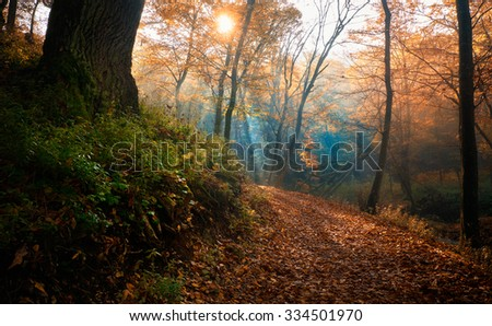 Amazing rays of light in autumn forest - stock photo