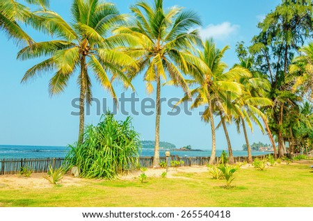 Amazing sandy beach with coconut palm  - stock photo