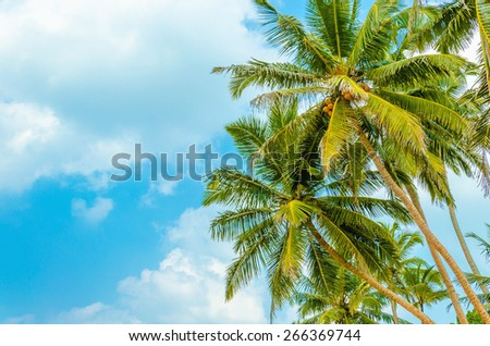Amazing sandy beach with coconut palm against  blue sky  - stock photo