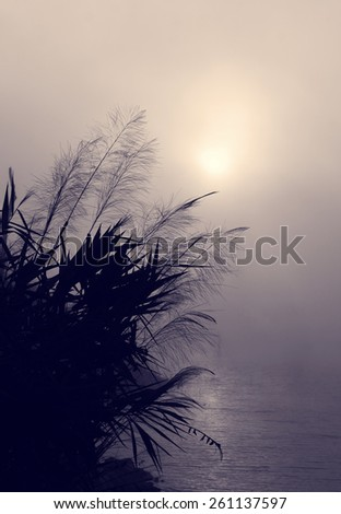 Amazing scenery of Vietnam village in morning at sunrise, silhouette of wild grass beside lake, sun go up make abstract landscape