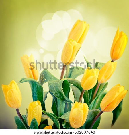 Amazing spring floral background, yellow tulip flowers