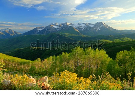 Amazing spring landscape with yellow wildflowers in the Wasatch Mountains, Utah, USA. - stock photo
