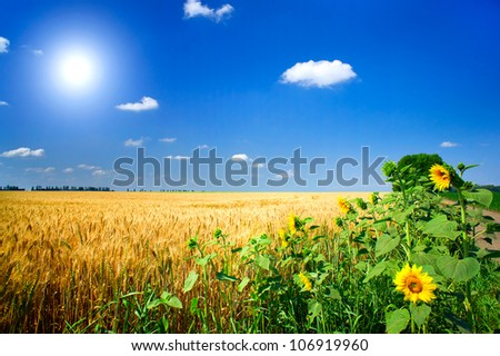 Amazing summer landscape with cereals field,sunflowers  and fun sun. - stock photo