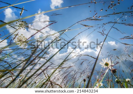 Amazing sunny day at summer meadow with wildflowers under blue sky. Abstract nature floral background - stock photo