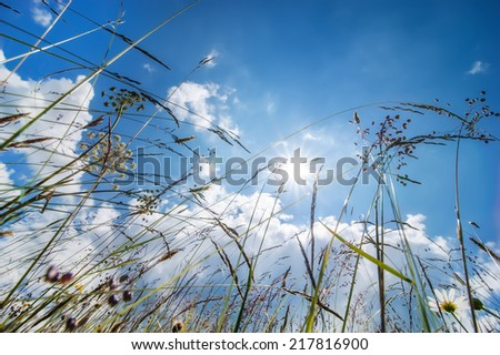 Amazing sunny day at summer meadow with wildflowers under blue sky. Nature floral background - stock photo