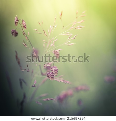 Amazing sunrise at summer meadow with wildflowers. Abstract floral background in vintage style, watercolor painting effect and blur - stock photo