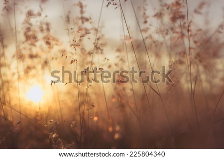 Amazing sunrise at summer meadow with wildflowers. Abstract floral background in vintage style - stock photo