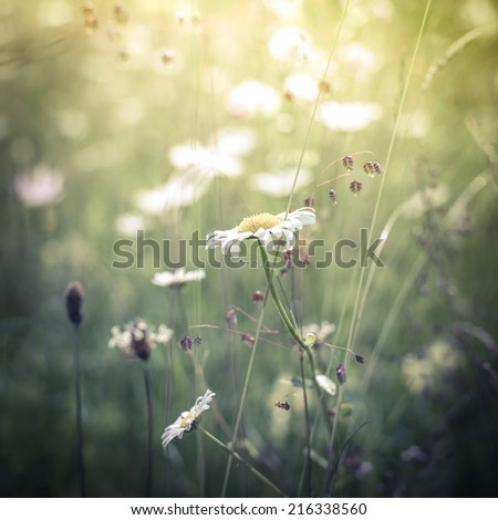 Amazing sunrise at summer meadow with wildflowers. Nature floral background in vintage style - stock photo