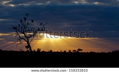 Amazing Sunset - stock photo