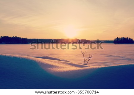 Amazing sunset in the winter time in Finland. A lonely tiny tree branch is standing in the snow against the glowing sun. Image has a vintage and flare effect applied.