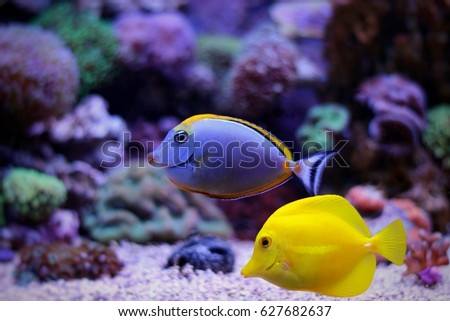 Amazing Tropical Aquarium Fishes