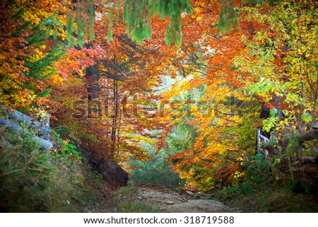 Amazing vibrant Autumn Fall Leaves colors in forest landscape and footpath to silence - stock photo