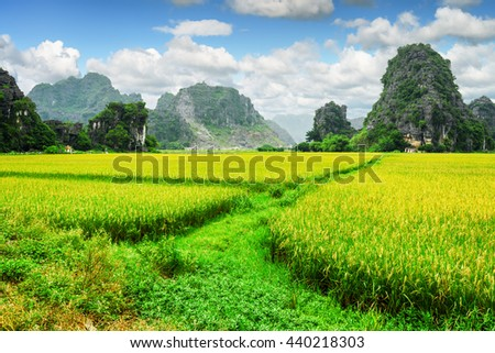 Amazing view of bright green rice fields among scenic karst mountains at Ninh Binh Province, Vietnam. Blue sky with clouds in background. Ninh Binh Province is a popular tourist destination of Asia.