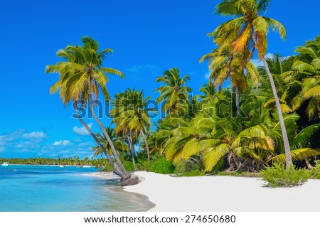 Amazing view of Caribbean beach with white sand and beautiful exotic palm trees, Dominican Republic, Caribbean Islands - stock photo