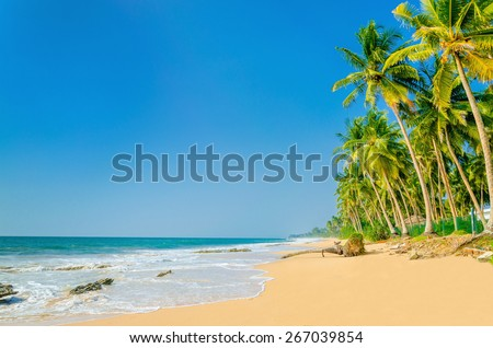 Amazing view of exotic sandy beach with high palm trees against blue sky - stock photo