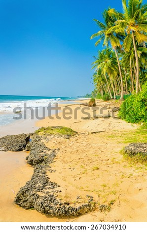 Amazing view of exotic sandy beach with stones high palm trees against blue sky