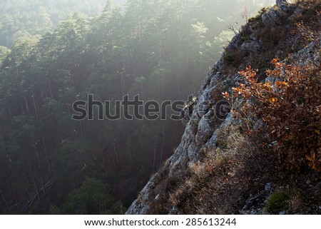amazing view of forest in Crimean mountains - stock photo