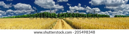 Amazing view of golden wheat field  by summertime. - stock photo