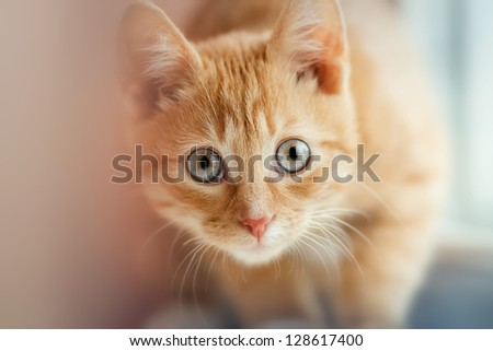 amazing view of the little cat - stock photo