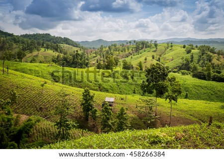 Amazing wild nature view of mountain forest landscape on sunlight at middle of summer, Corn fields grown on the mountain