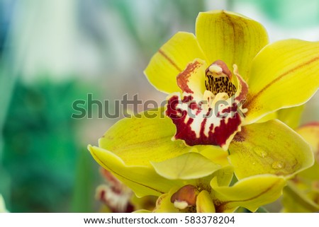 Amazing yellow and purple Orchids with copy space for text. Yellow Orchids on floral background.  Orchids are amazing flowers and also elegant.