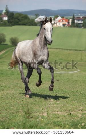 Amazing young horse running alone on pasturage - stock photo