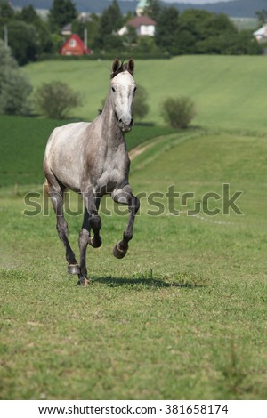 Amazing young horse running alone on pasturage - stock photo