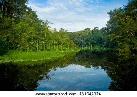 Amazon landscape,  Yasuni, Ecuador - stock photo
