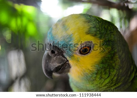 Amazon Parrot - stock photo