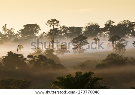 Amazon Rain Forest - State of Acre, Brazil   - stock photo