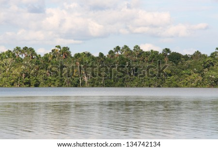 Amazon river, amazon jungle - stock photo