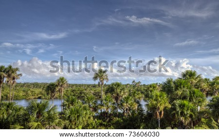 Amazon River with green lush trees and a blue sky - stock photo