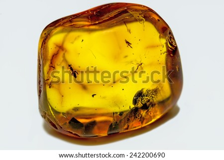 amber with embedded insects - stock photo