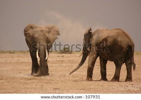 Amboseli elli boys 3,04 - stock photo