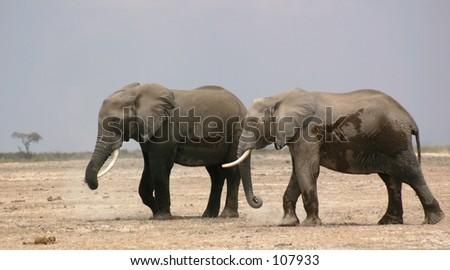Amboseli elli boys 4,04 - stock photo