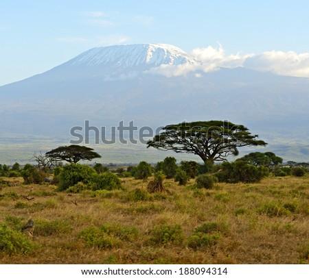 Amboseli Kenyan savannah landscape in summer. Africa, Kenya - stock photo