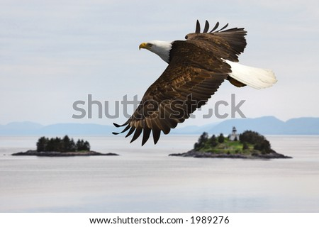 america bald eagle flying over water with islands and lighthouse - stock photo