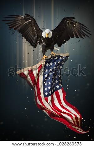 American Bald Eagle Flying Symbol America Stock Photo Edit Now