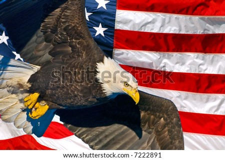 american bald eagle in flight superimposed over usa flag - stock photo