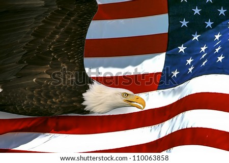 american bald eagle on flag background