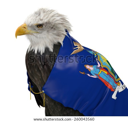 American bald eagle wearing the New York state flag  - stock photo