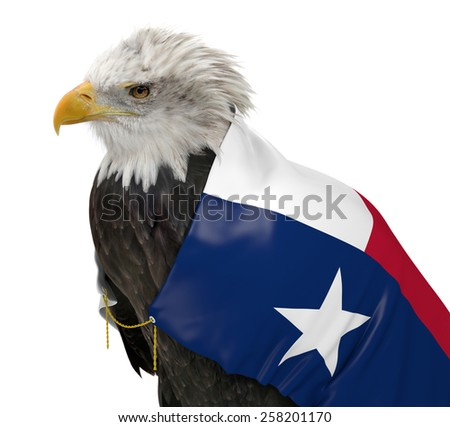 American bald eagle wearing the Texas state flag - stock photo