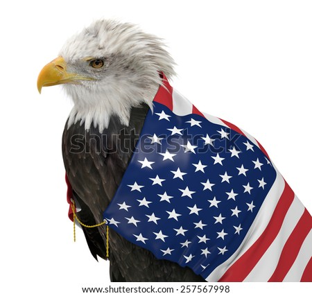 American bald eagle wearing the United States country flag - stock photo