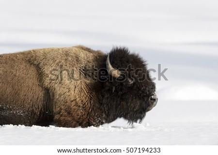 Singles in buffalo ok