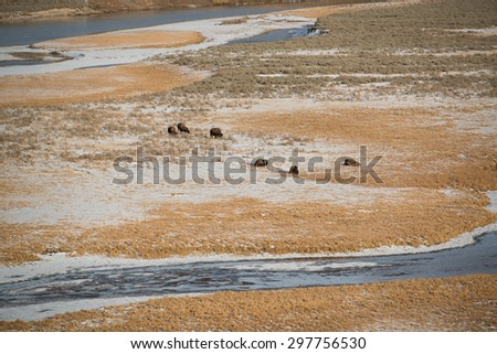 American bison on the prairie - stock photo