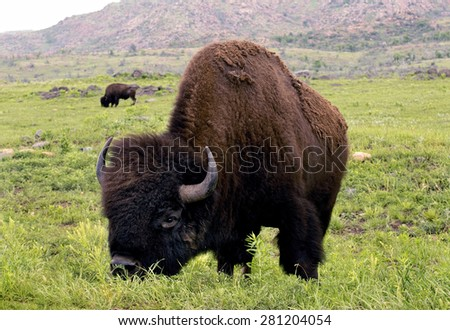 All find free sex in bison oklahoma